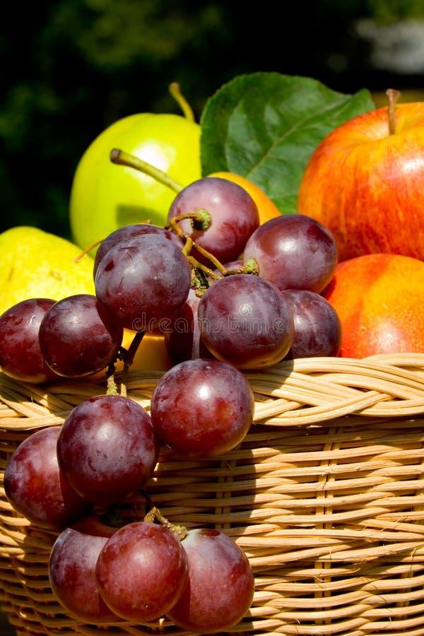 Fruit toujours de durée images stock