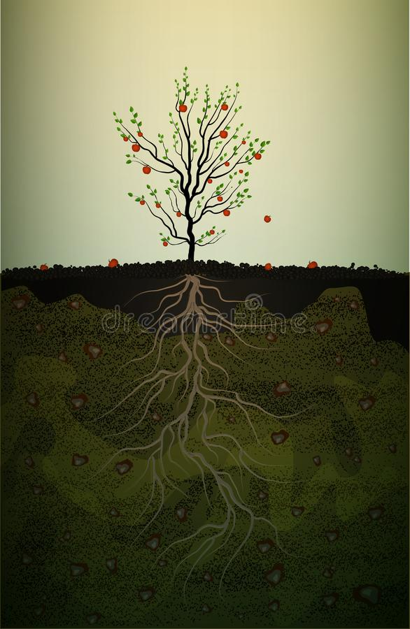Fruit tree with strong root in soil,red apple tree with long root, strong root idea,. Vector vector illustration