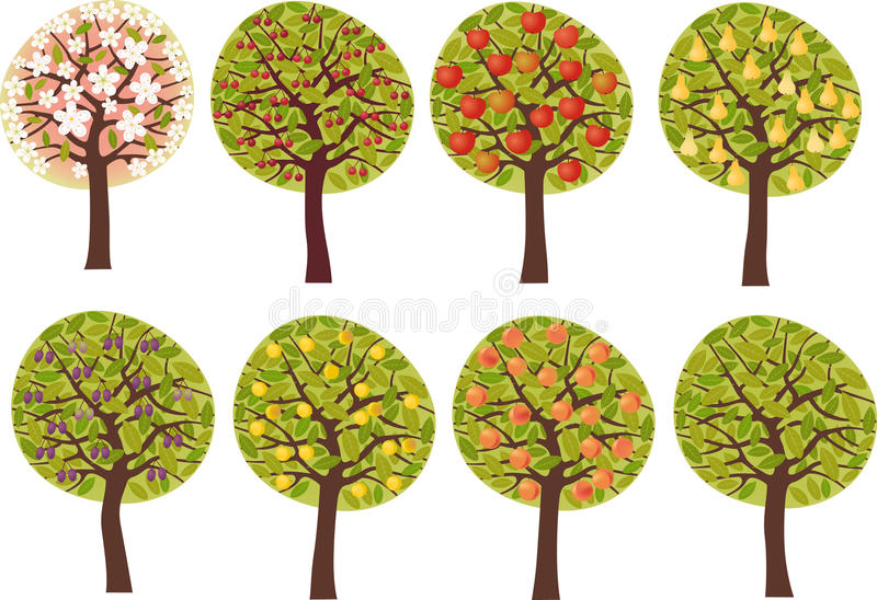 Fruit trees royalty free illustration
