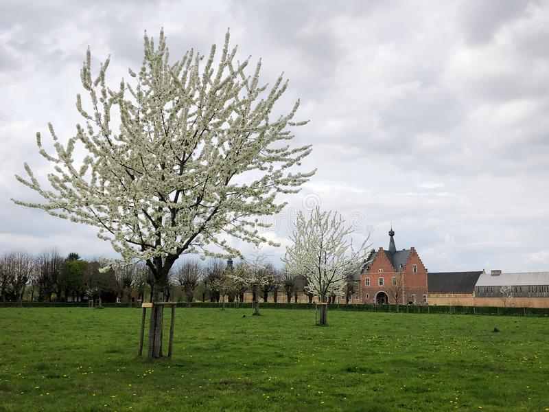 Fruit trees in full bloom, Herkenrode abbey in the distance, Limburg, Belgium stock photos