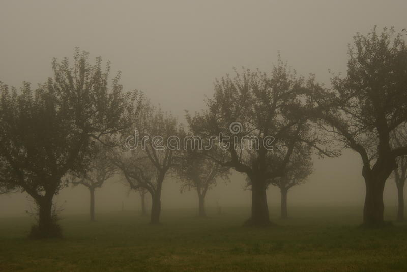 Download Fruit Trees In The Morning Fog Stock Photo - Image: 21952908