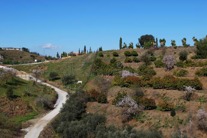 Fruit trees in Springtime, Andalusia, Spain. Fruit and almond trees in blossom on terraced land in the Springtime, Near Alhaurin el Grande, Mijas Costa, Malaga royalty free stock images