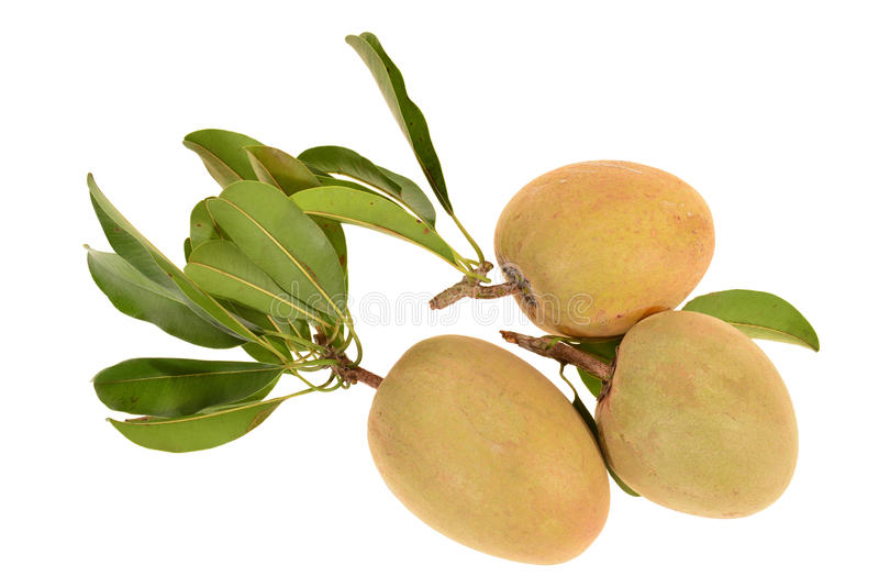 Fruit tropical, Chiku image stock