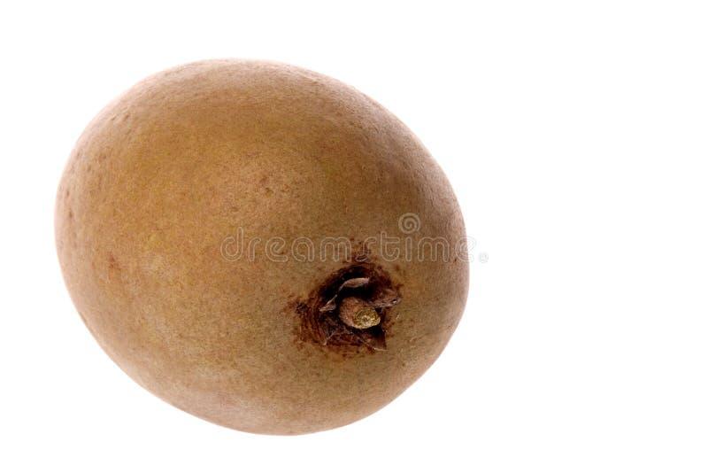 Fruit tropical de Ciku image stock