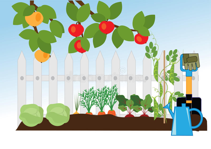Fruit and vegetable garden royalty free illustration