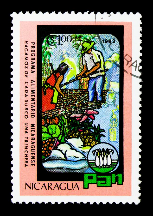 Fruit and vegetable pickers, World Food Day serie, circa 1982 stock photo