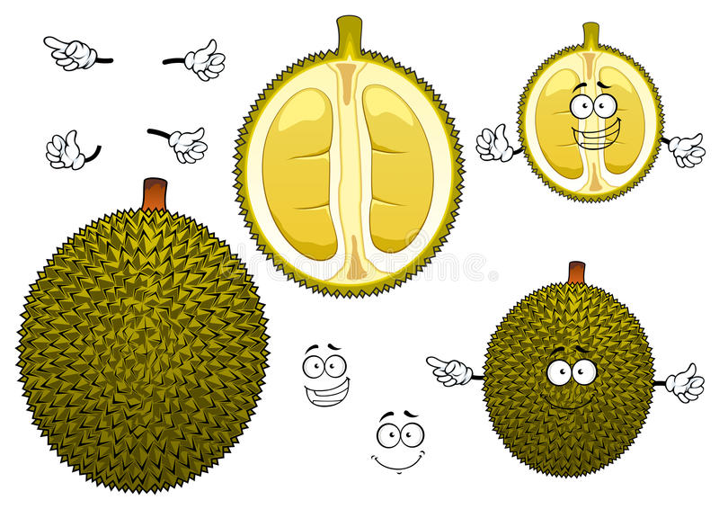 Fruit vert puant thaïlandais de durian illustration stock