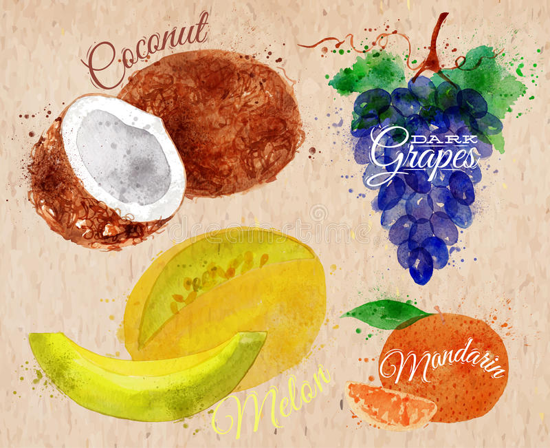 Fruit watercolor coconut, melon, mandarin, dark. Fruit set drawn watercolor blots and stains with a spray coconut, melon, mandarin, dark grapes in kraft vector illustration