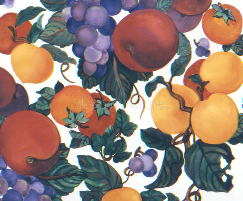 Fruit Watercolor hand painted apricots grapes plums stock illustration