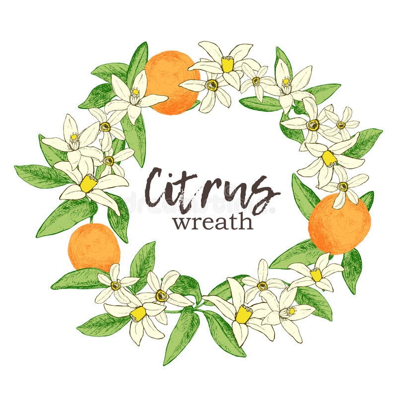 Fruit wreath with isolated hand drawn oranges and flowers in ske. Tch style. Vector illustration stock illustration