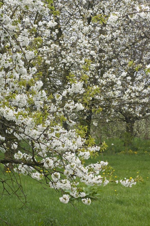 Fruitbomen; Huertas imagen de archivo libre de regalías