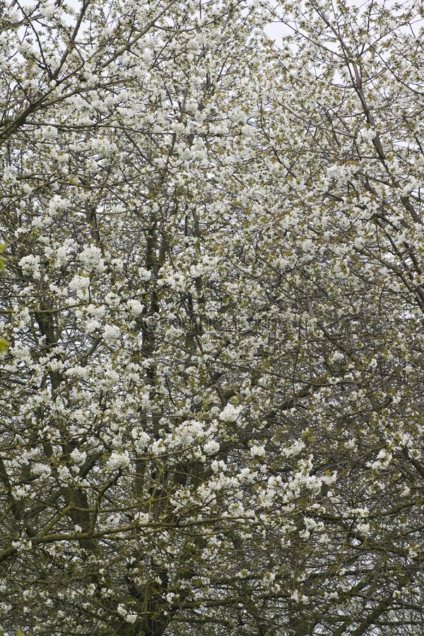 Fruitbomen; Huertas fotos de archivo