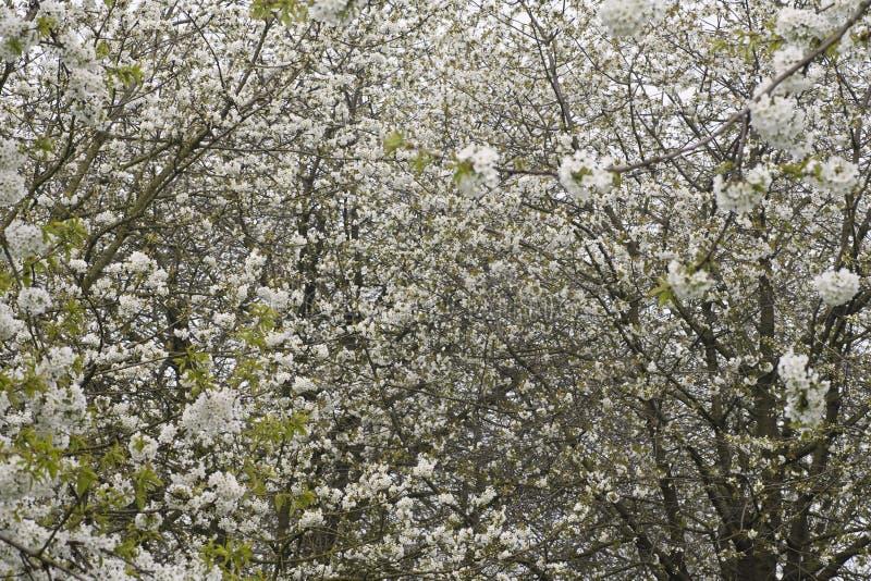 Fruitbomen; Huertas foto de archivo