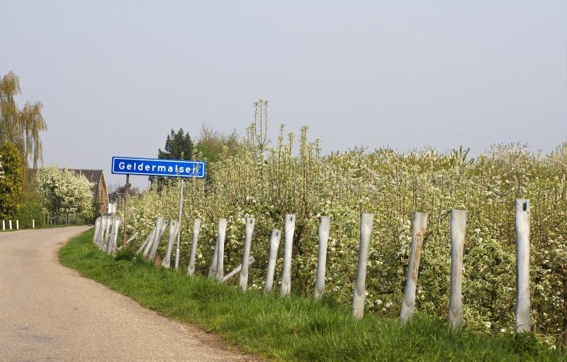 Fruitbomen; Orchards. Fruitbomen in de Betuwe; Orchards in the Betuwe royalty free stock images