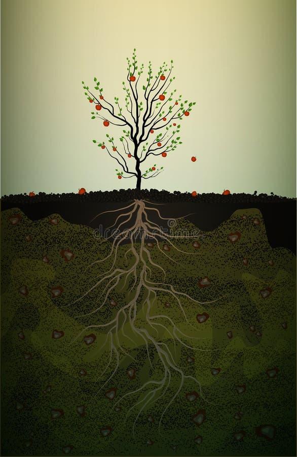 Fruitboom met sterke wortel in grond, rode appelboom met lange wortel, sterk wortelidee, vector illustratie
