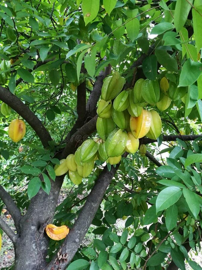 Fruite fotografia stock