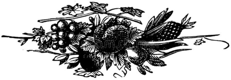 Fruits-002 Free Public Domain Cc0 Image