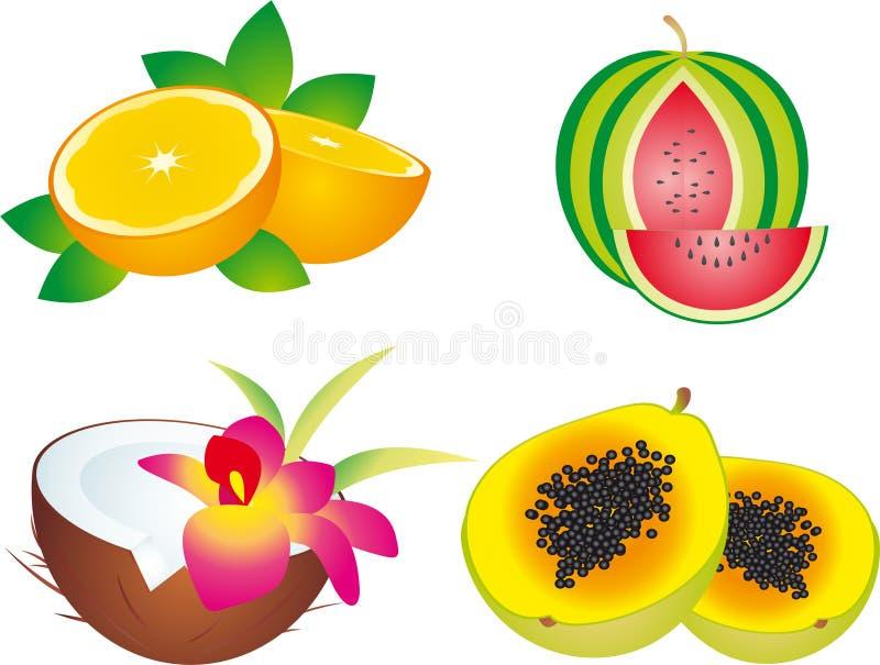 Download Fruits stock illustration. Illustration of pulp, green - 11841936