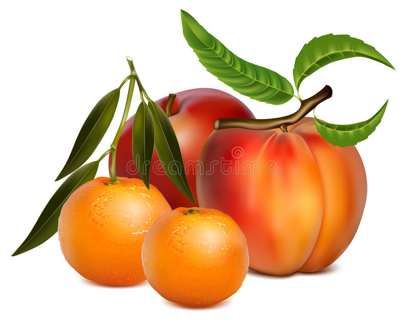 Fruits. stock illustration