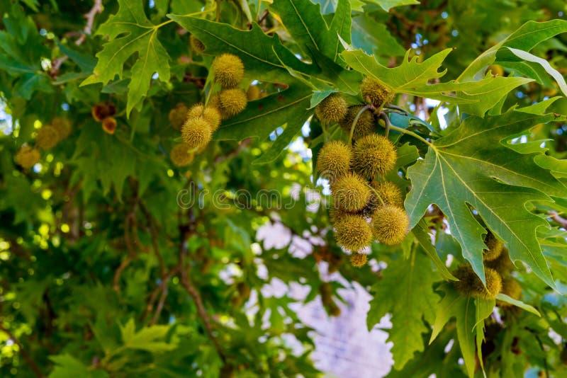 Fruits abstraits sur un arbre photographie stock
