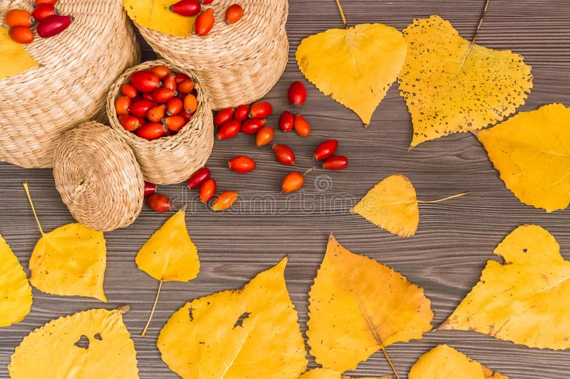 Fruits of autumn. Rose hips in a basket and yellow leaves on a wooden surface, concept of autumn background royalty free stock image