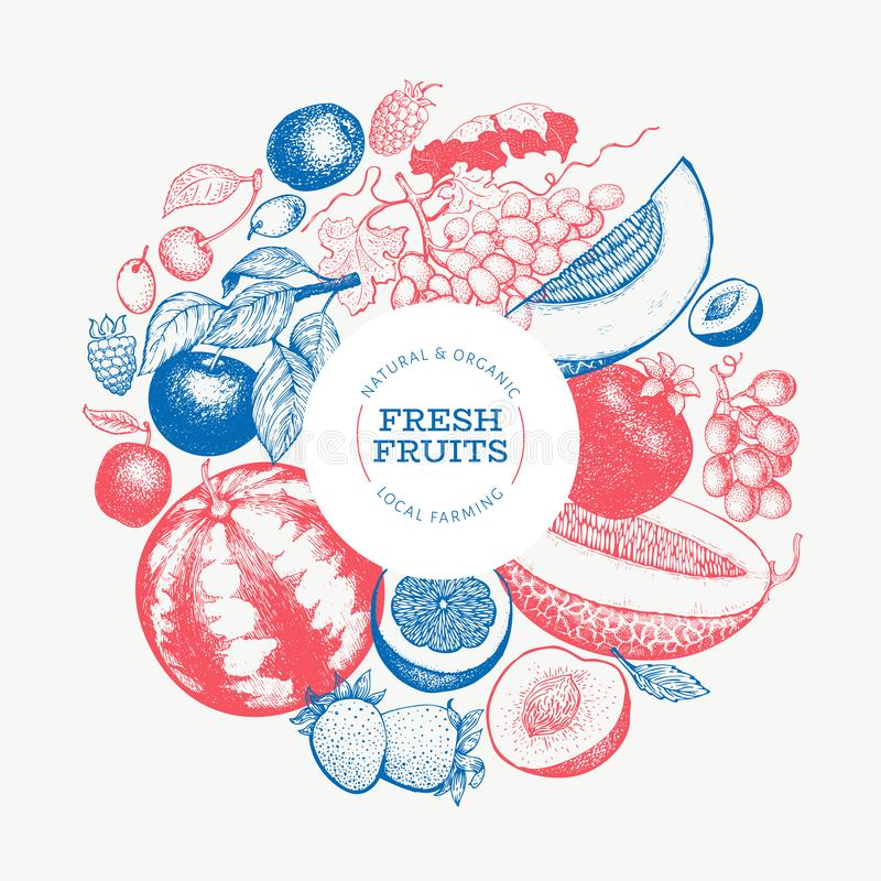 Fruits and berries design template. Hand drawn vector tropic fruits illustration. Engraved style fruit. Retro exotic food banner. Fruits and berries design royalty free illustration