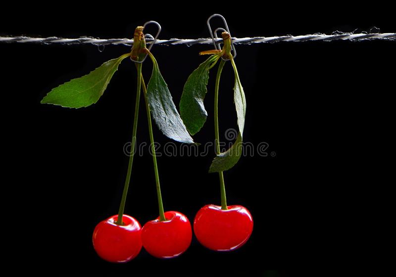 Fruits of a cherry on a rope royalty free stock image