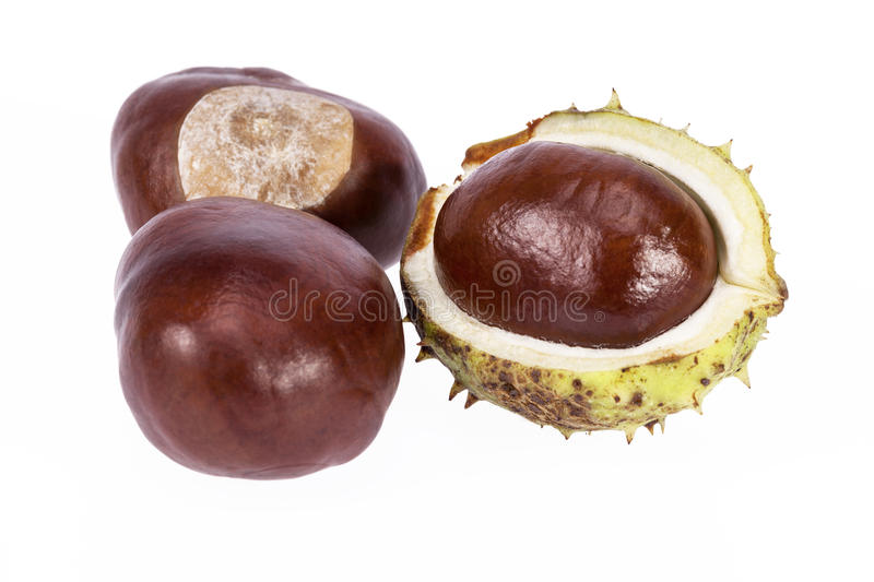 Fruits of chestnuts in green shell isolated on white background. Close up royalty free stock images