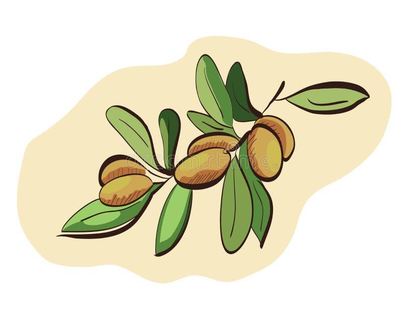 Fruits d'argan sur la branche illustration stock
