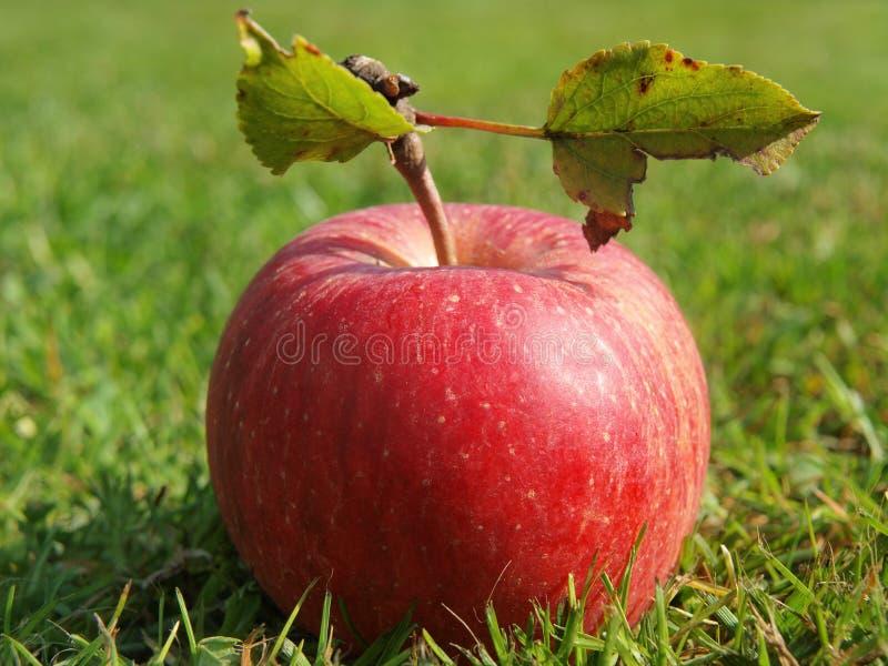 Fruits d'automne, Bohême du sud images libres de droits