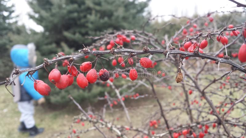 Fruits d'hiver photo stock