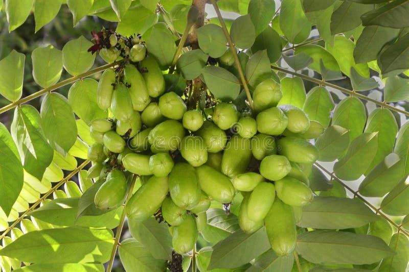 Fruits de Bilimbi photo libre de droits