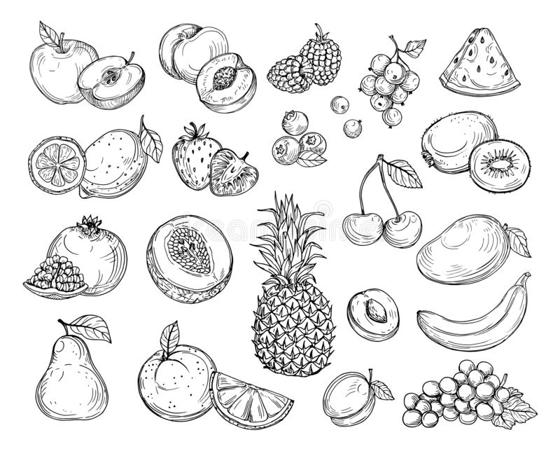 Fruits de croquis Melon de fraise, mangue de p?che Ananas de banane, ensemble tir? par la main de vecteur de baie de fruit de rai illustration libre de droits
