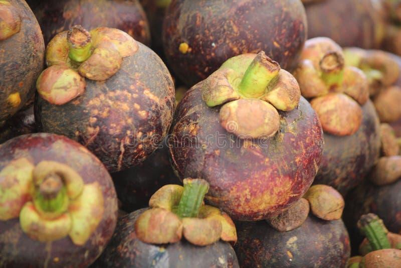 Fruits de mangoustan photo libre de droits