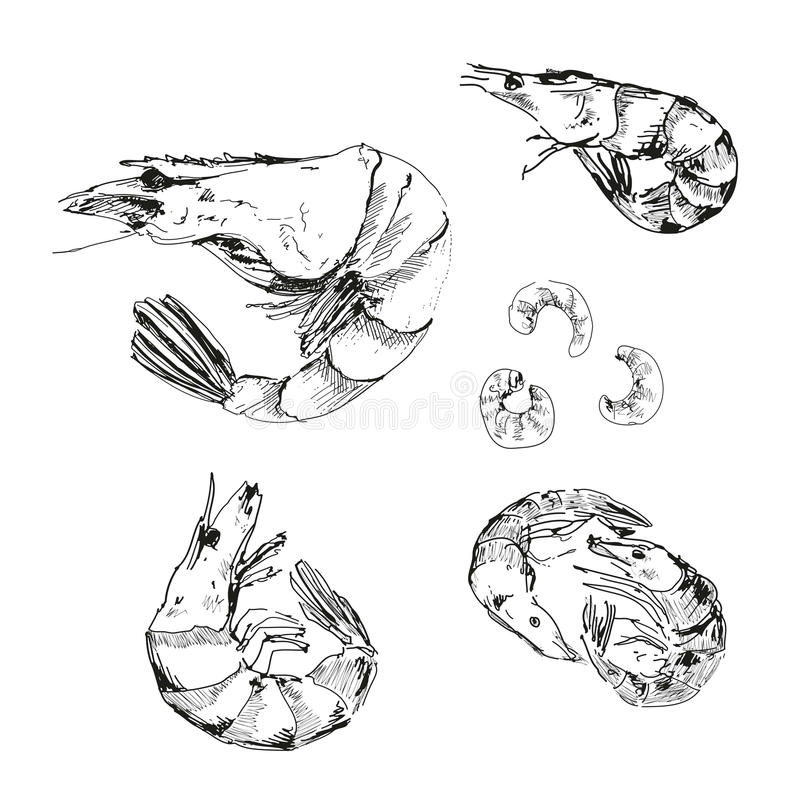 Fruits de mer. Crevettes. illustration libre de droits