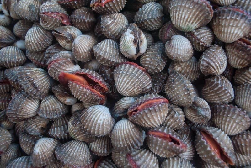 Fruits de mer frais de COQUE image libre de droits