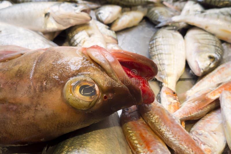 Fruits de mer poissons avec la langue rouge image stock for Vente poisson rouge toulouse