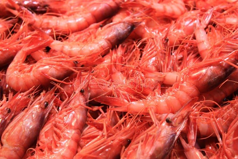 Fruits de mer sur le marché de nourriture à Valence images libres de droits