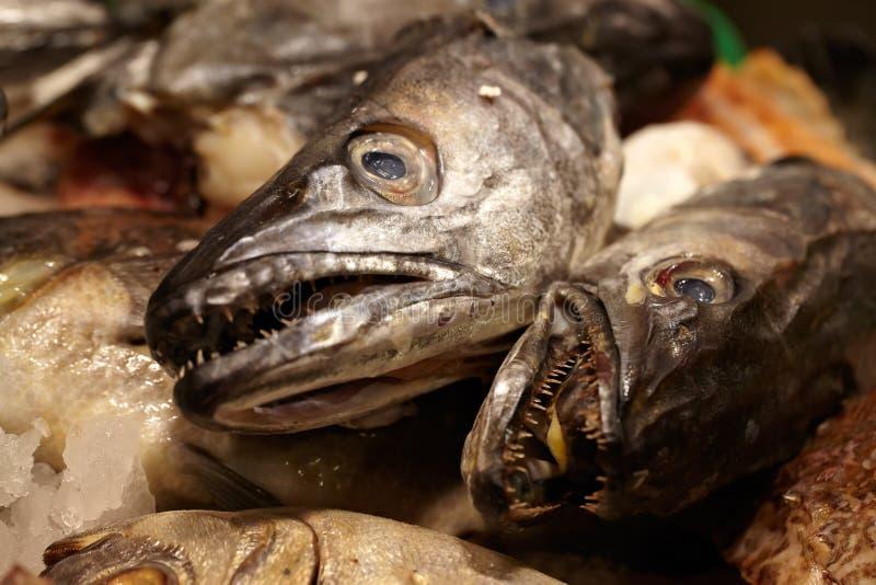 Fruits de mer. Têtes de poissons. images stock