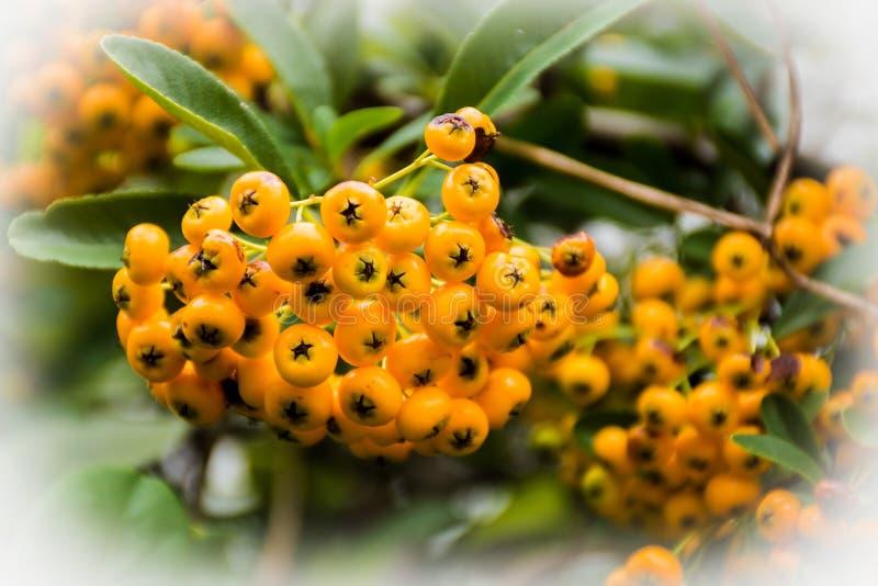 Fruits de nature photographie stock