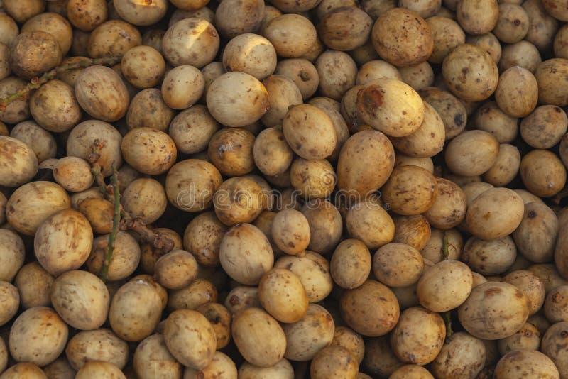 Fruits de parasiticum de Lansium de langsat photos libres de droits