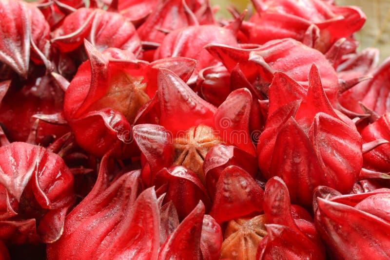 Fruits de Roselle photographie stock libre de droits