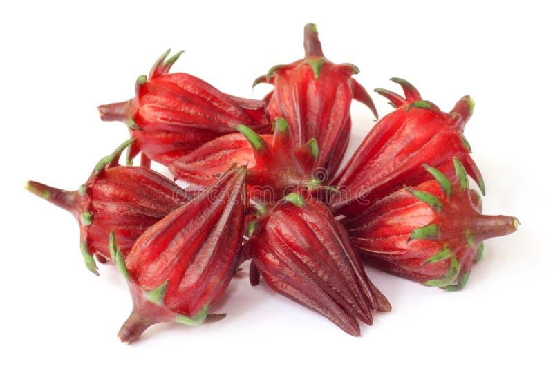 Fruits de sabdariffa ou de roselle de ketmie photo libre de droits