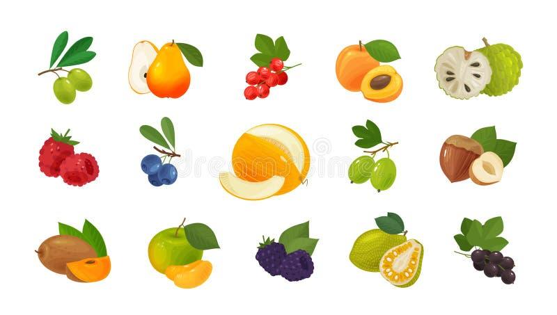 Fruits et baies, ensemble d'icônes colorées Concept de nourriture Illustration de vecteur illustration de vecteur