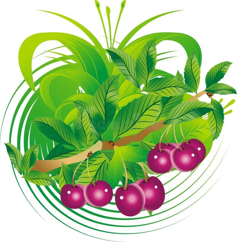 Download Fruits et lames de cerise illustration de vecteur. Illustration du milieux - 8660559