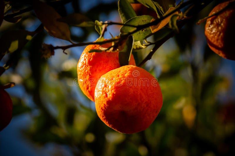 Fruits et leur diversité dans les tailles images libres de droits
