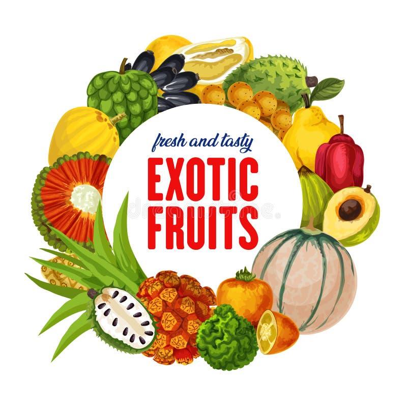 Fruits exotiques, agrume tropical, récolte de cantaloup illustration de vecteur
