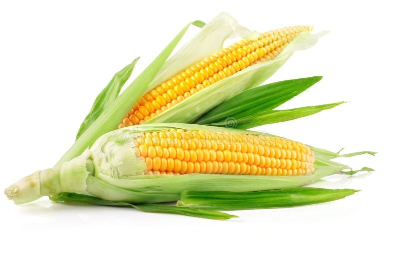 Fruits frais de maïs avec les lames vertes images libres de droits