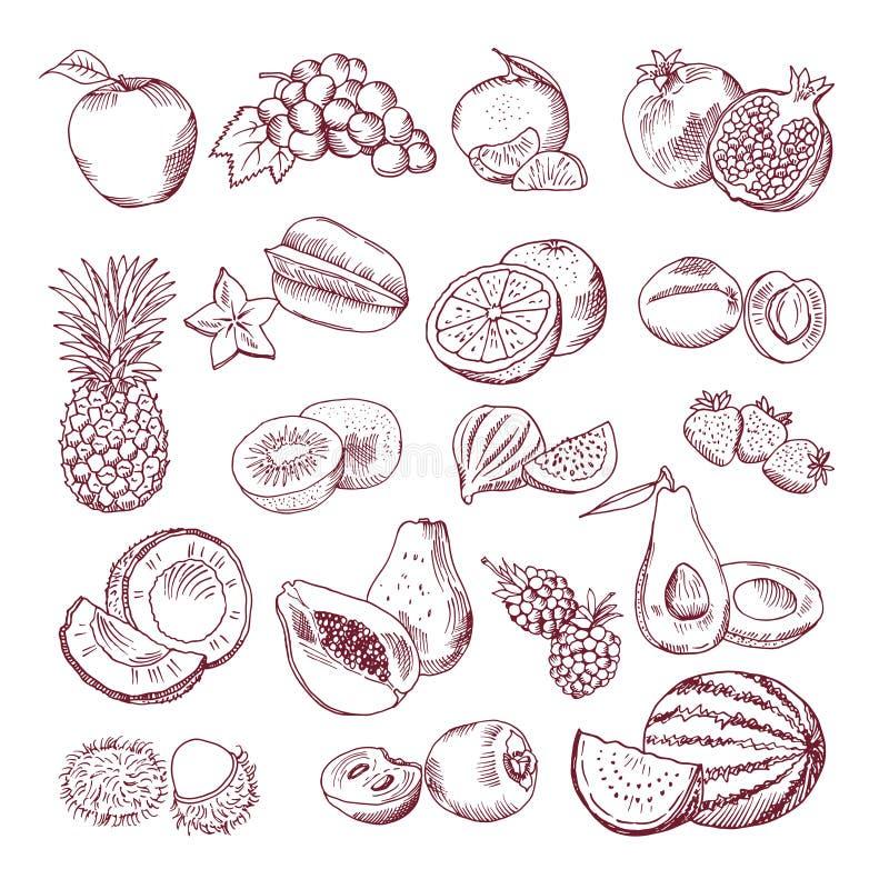 Fruits frais et juteux Isolat tiré par la main d'illustration de vecteur sur le fond blanc Photos de griffonnage réglées illustration de vecteur