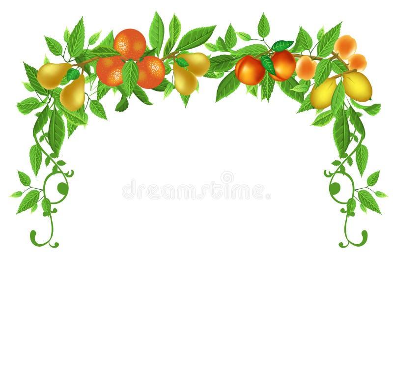 Fruits frame vector illustration